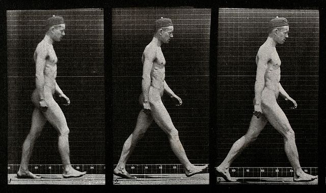 "Image credit: Wellcome Library, London ""A Man Walking"", Image V0048616, Collotype after Eadweard Muybridge, 1887."