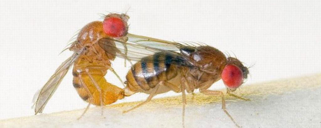 fruitfly-lovin